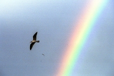 Seagulls and rainbow, Galicia, Spain